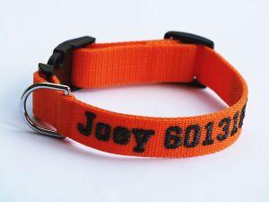 Oranžový popruh 2,5 cm Paradise Collar